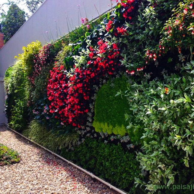muro-verde-colmedica-colombia